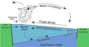 Doğudan batıya taşınan sıcak sular şekildeki döngüyü oluşturuyor. Alize rüzgarlarının zayıflamasıyla thermocline çizgisinin eğimi azalıyor ve soğuk su yüzeye çıkamıyor
