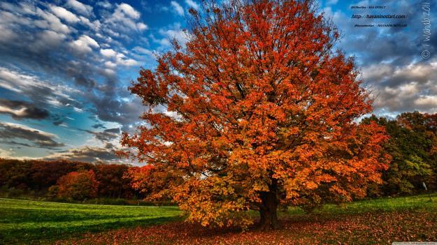 autumn_2-wallpaper-3840x2160